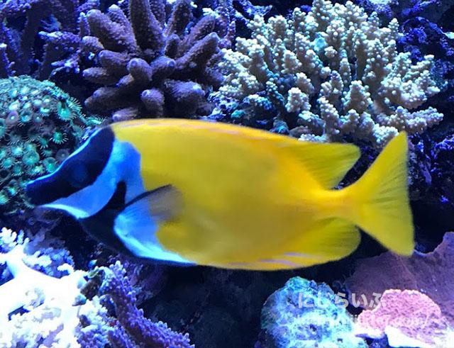 水族館の魚たち